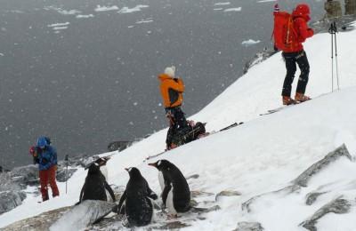 Det er noe spesielt med å starte toppturen i selskap med pingviner. Bli med vår Tindevegleder Gjert Grødal til Antarktis for å gå toppturer, padle kajakk, klatre og seile en hel måned.